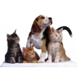 Зоотовары   Корма для животных